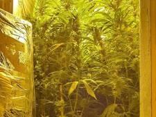 Hennepkwekerij met 208 oogstrijpe planten geruimd in Kaatsheuvel