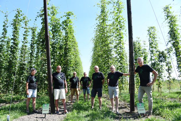 Brouwerij De Roos heeft al drie jaar een eigen hopveld. De hopcommissie bewerkt het hele jaar door het veld met in het midden Harrie de Leijer en helemaal rechts Fred Hirdes.
