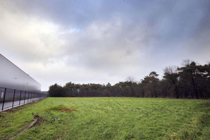 Zicht op het BZOB-bos ten zuiden van Brouwhuis in Helmond. foto Ton van de Meulenhof