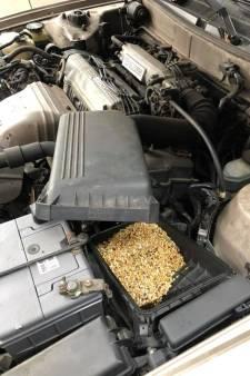 Automonteur doet vreemde vondst: Muis slaat kilo zaad op in luchtfilter Toyota
