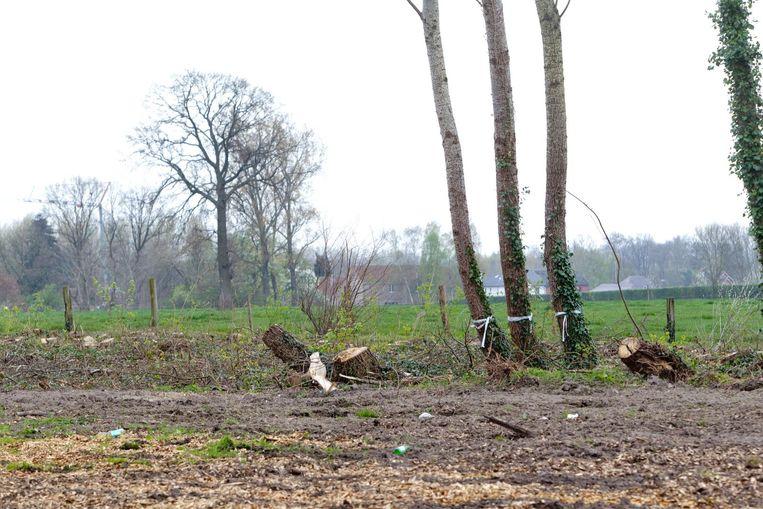 Heel wat bomen van het bosje moesten eraan geloven, met dit uitzicht tot gevolg.