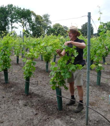 Henk Aarts uit Zurrik is nu gediplomeerd wijnbouwer