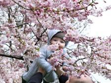 Het is lente! De bloesem bloeit