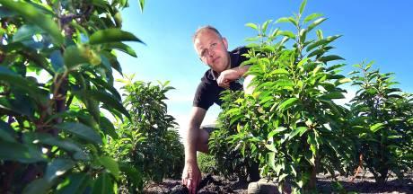 Dan is het te droog, dan weer te nat: zo wapenen deze boeren zich tegen extreem weer