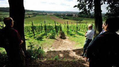 Wandelen langs de Hoegaardse wijngaarden