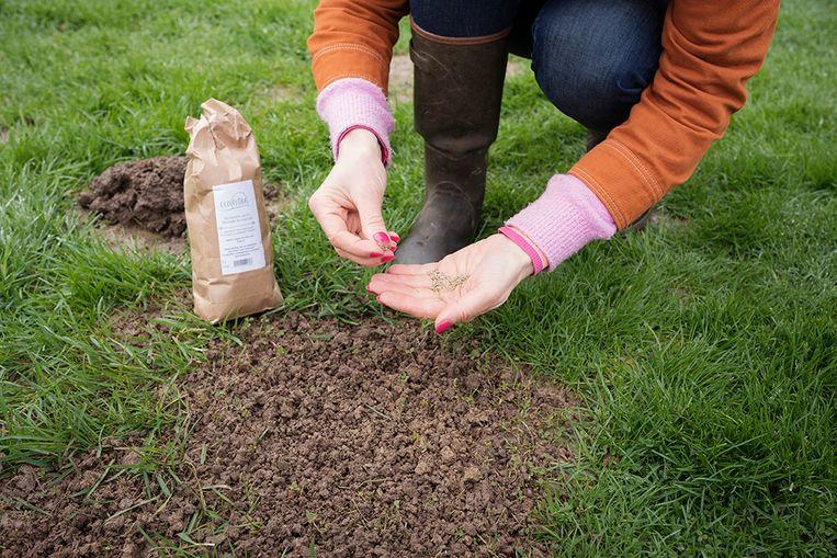 Strooi een mengeling van biodivers gazon uit over de kale plek. Die bevat doorgaans 95% graszaden en 5% bloemzaden