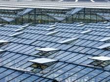 Glastuinbouw krijgt eigen leerstoel om de positie Westlandse tuinbouw te waarborgen