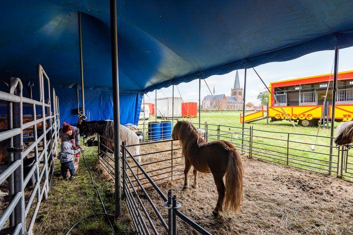 Circus Barani doolt door de regio. Momenteel hebben de circuslieden hun tenten opgeslagen op een weiland aan de Scheldeweg in Hoogerheide. Op de foto Amber Blokker en haar zoon.