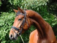 Drie paarden in Nuenen gestolen door oplichter