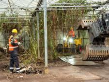 Zwaar verwaarloosd kassencomplex in Elburg eindelijk tegen de vlakte