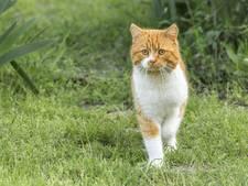 'Dierenbeul is uit op katten in Heenweg'