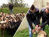 Luc is verre van het zwarte schaap van de familie: hij volgt z'n vader op als herder