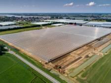 Dwangsom dreigt voor Dutch Berries in Zuilichem; groenstrook is niet in orde
