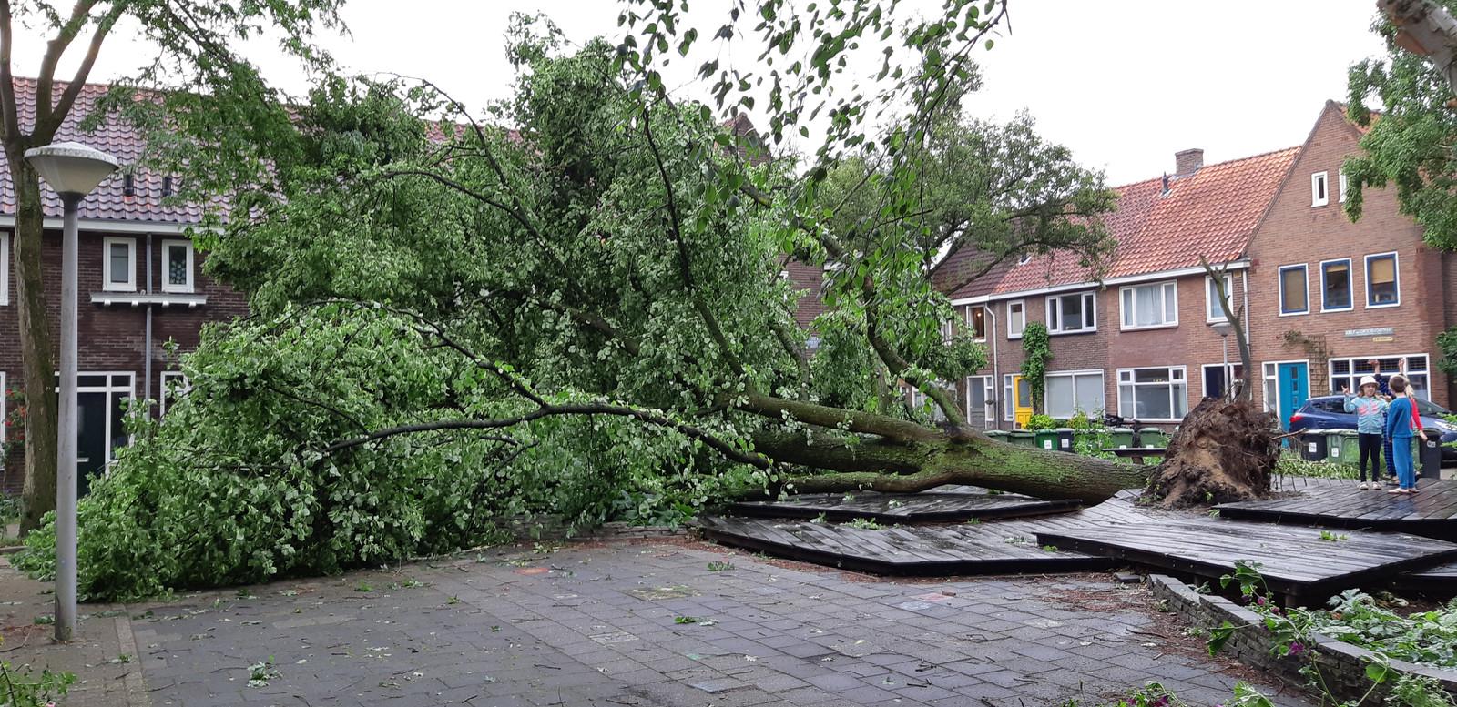 Bevrijdingsboom aan de Lodewijk Houbenstraat