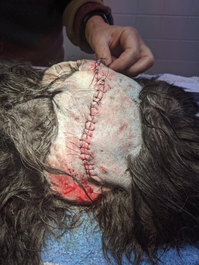 De hond van Eric Hennekam had 25 hechtingen nodig.