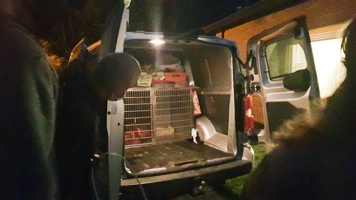 Le chien a été emmené dans un refuge pour animaux pour y être euthanasié.