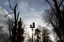 Groenmedewekers halen vandaag vijf esdoorns aan de Boompjeswal in Zutphen weg. De bomen zijn te gevaarlijk.