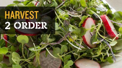 Nieuwe foodtrend: eten we binnenkort allemaal microgroenten?