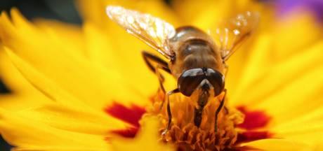 Bloemenvelden moeten bijen trekken in Twenterand