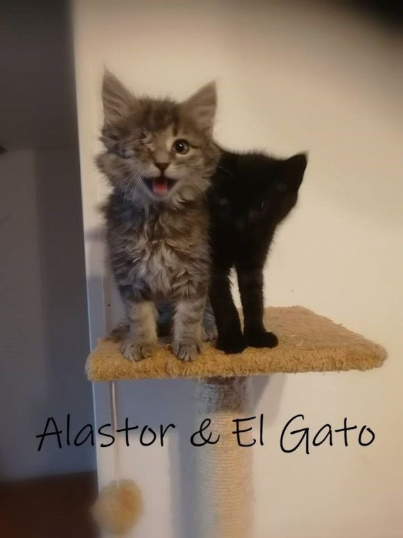 Alastor en El Gato.