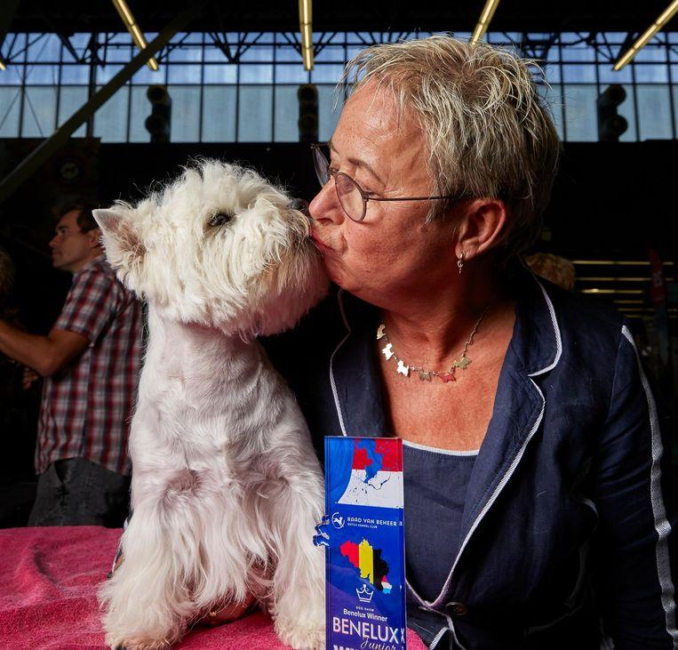Radley (1), West Highland white terrier van Ine Krabbe uit Twente. Radley is net in Slovenië gekocht, voor een frisse bloedlijn Beeld Isabella Rozendaal