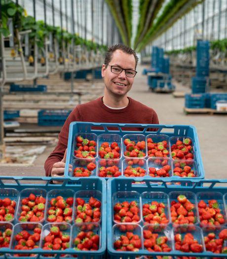 Honderd bedden tussen de Betuwse aardbeien voor Poolse werknemers