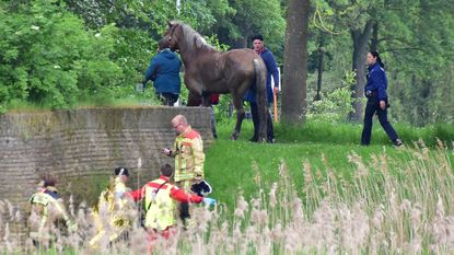 """Paarden slaan op hol bij start van Kattestoet: """"Goddank raakte niemand gewond"""""""