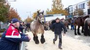 Massa volk bezoekt zeventigste jaarmarkt in Lennik