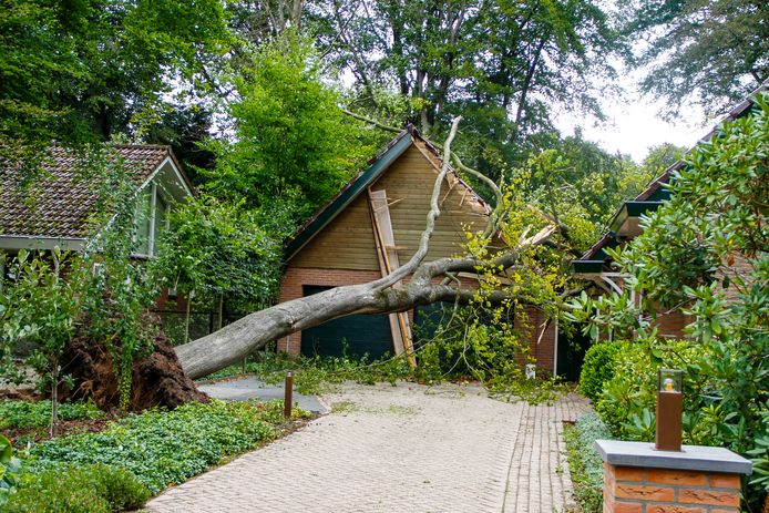 De boom die vandaag omwaaide, zorgde voor flinke schade