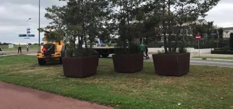 Politie haalt bomen voor bierfestival Cuijk van de weg: 'Ik dacht dat de agenten wilden helpen'