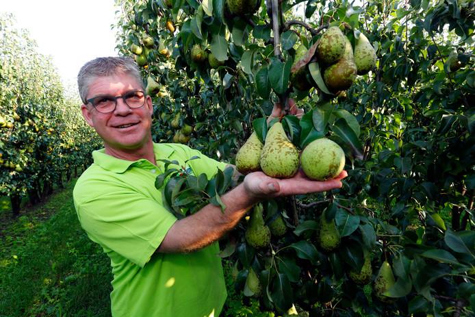 De Soerendonkse fruitteler Ad Smits toont de peren, die vanaf vandaag geplukt worden.
