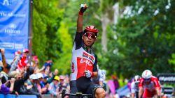 Ewan heerst in tweede etappe Tour Down Under, vrees voor sleutelbeenbreuk Hermans na massale valpartij