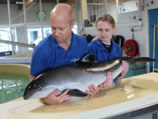 SOS Dolfijn wil opvangcentrum bouwen in Anna Paulowna