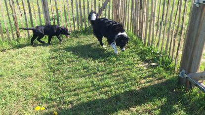 Hondenlosloopweide vlakbij Silsombos op komst