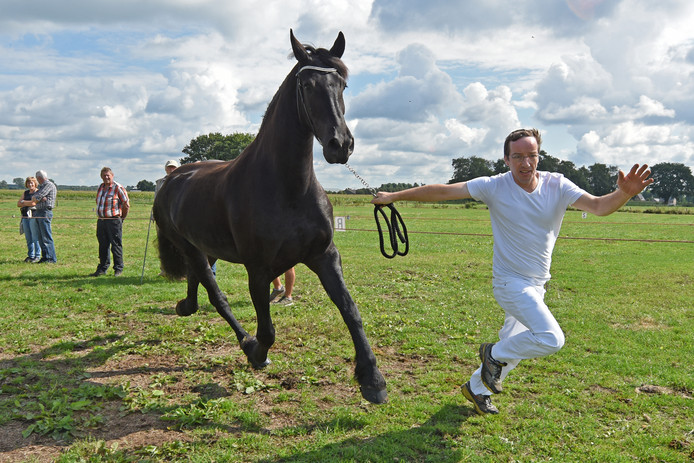 Archieffoto van de PaardenFok- en Showdag in Etten-Leur.