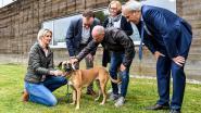 Gemeente kan verloren dieren makkelijker terugbrengen bij eigenaar dankzij chiplezer