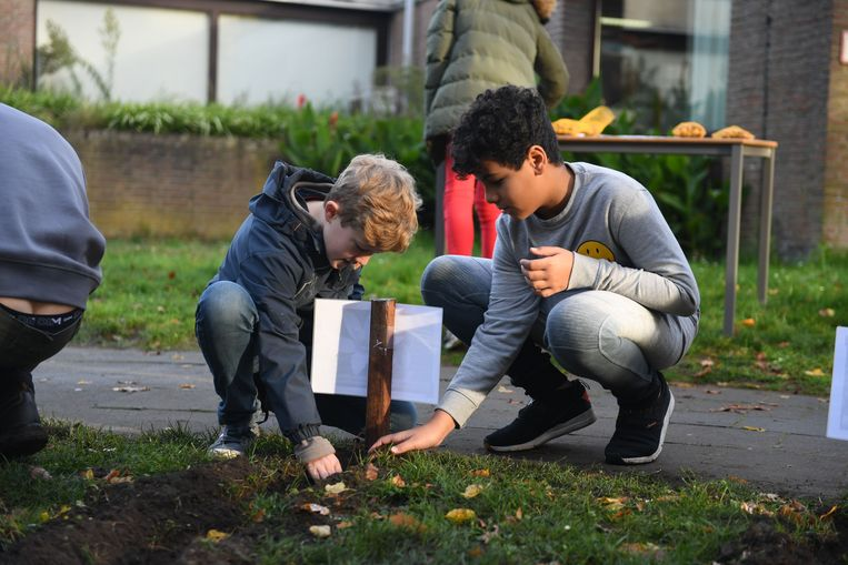Leerlingen van de middenschool in Keerbergen planten 550 bloembollen.