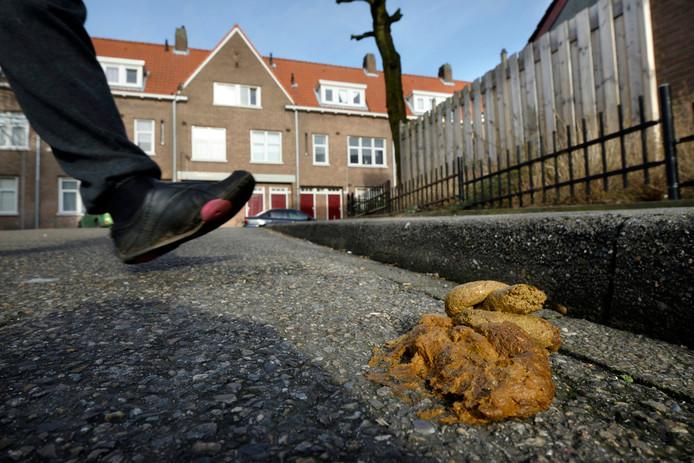 Hondenpoep op de stoep of op straat: vorm van overlast die in Arnhemse buurten voorkomt.