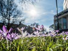 Maart roert zijn staart: eindelijk lenteweer op komst