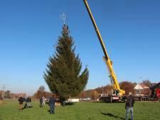 Een uit de kluiten gewassen oud-kerstboom voor Sterren Stralen
