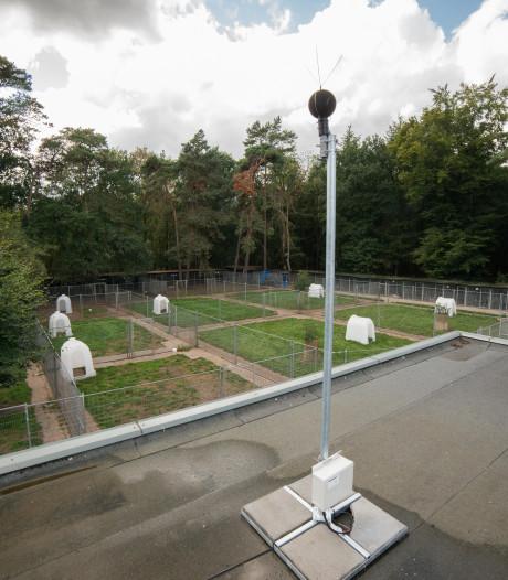 Gemeentebelang: verplaats 'ziekmakend' dierenasiel naar Lorentz