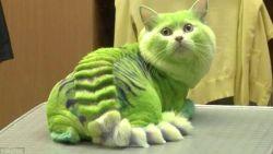 De beroemde kat Grumpy Cat is overleden. Ken jij deze 10 knappe katten al?
