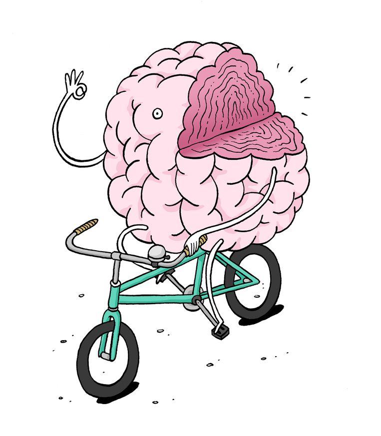 Hoeveel Brein Heb Je Eigenlijk Echt Nodig De Morgen
