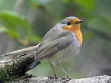 Vogelrevalidatiecentrum Zundert: Verwondering