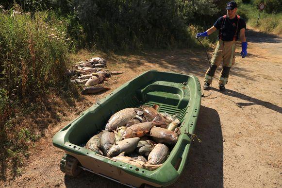 De brandweer haalde zaterdag meer dan 200 dode vissen uit het water van Fort Liefkenshoek.