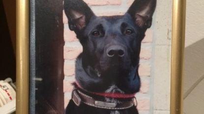"""Hond Lizzy overleeft vergiftiging niet: """"Ze was al wat ik nog van mijn overleden ouders had..."""""""