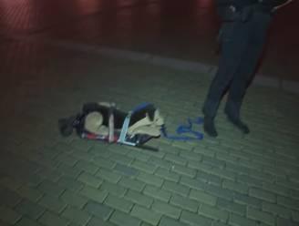 Tsjech laat speelgoedhond uit tijdens avondklok