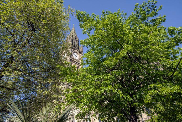 Bomen bieden in steden niet alleen schaduwplekken, maar verdampen ook water waardoor ze de omgeving verkoelen.