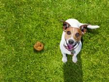 Honden blijven nog even belast in Harderwijk