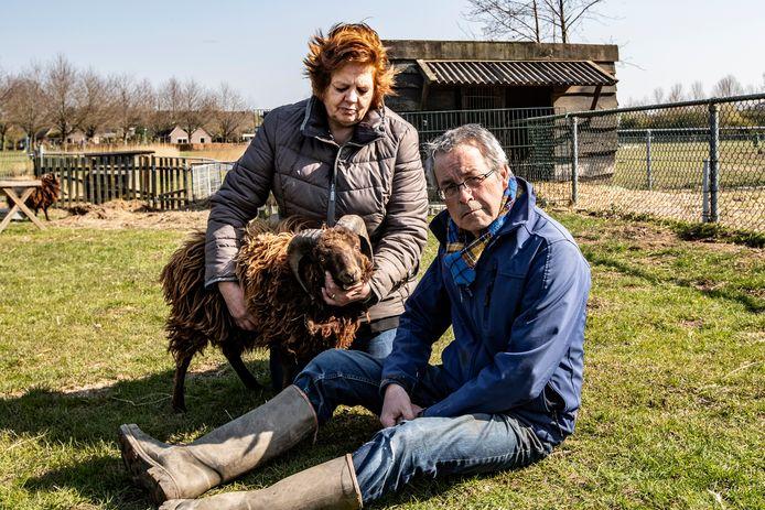 Henny Overkempe en Henk Heuvelman op Kinderboerderij De Vijverhof in Olst met een schaap uit de kudde die de slachtpartij wél heeft overleefd.